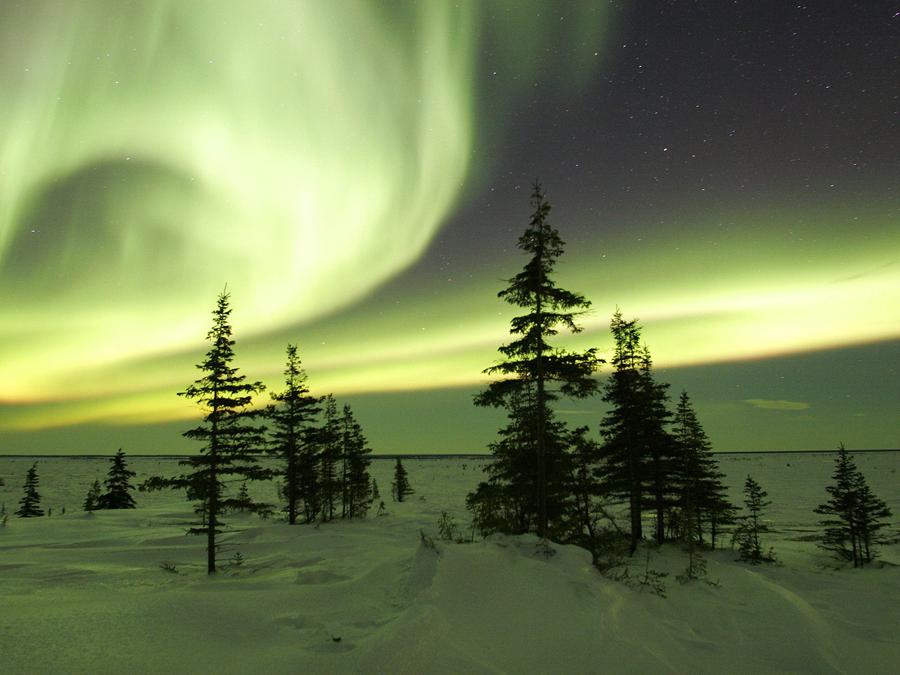 Курсы английского LCF. Канада зима.