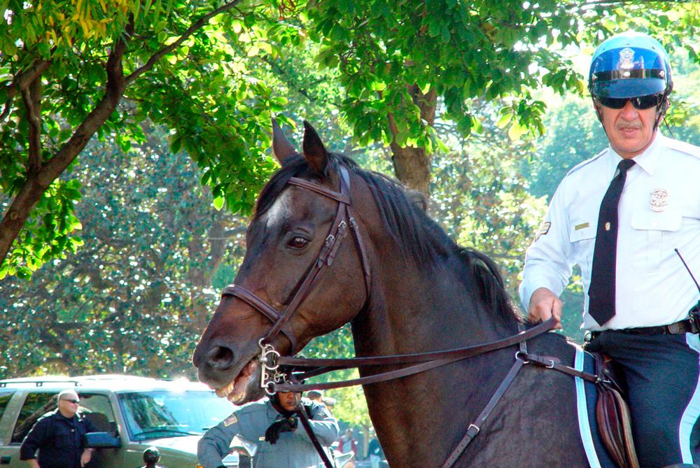 horseycop-1254363-1279x855