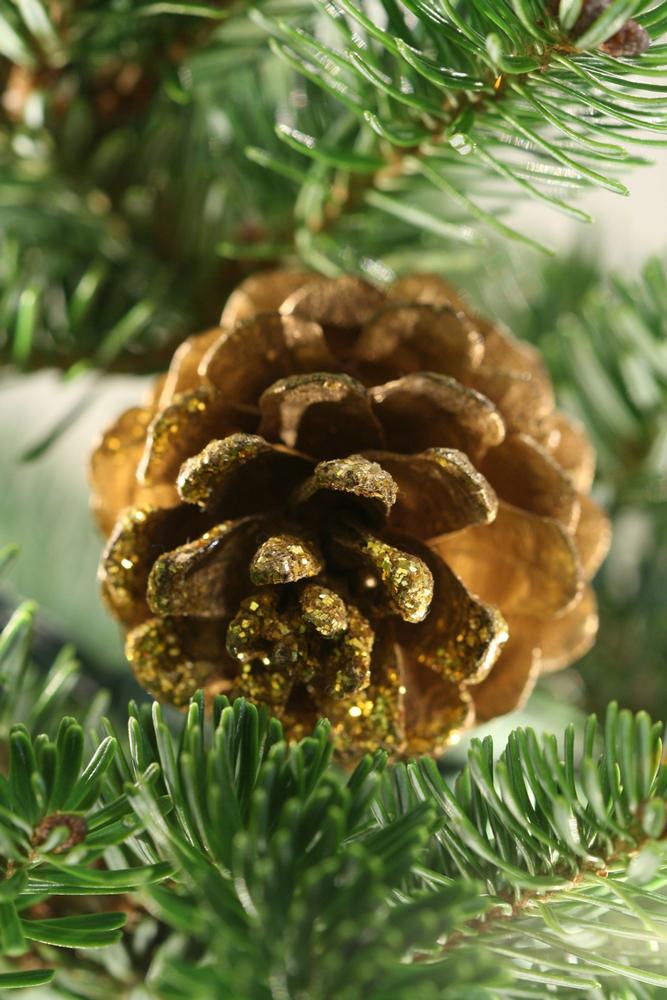 christmas-tree-1416062-1279x852