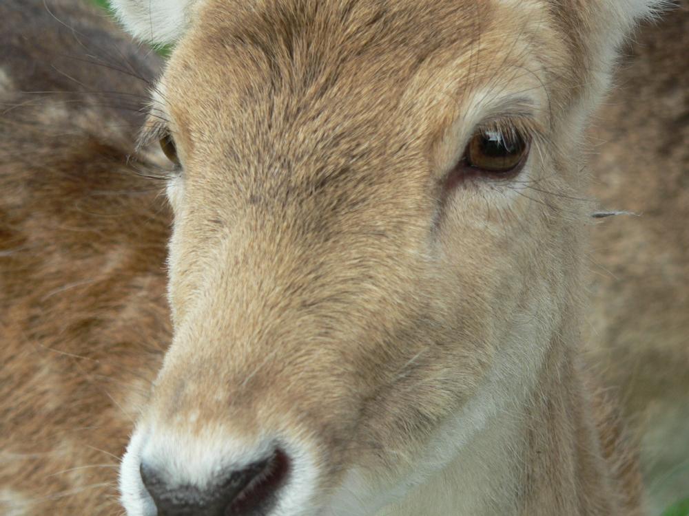 deer-closeup-1565728